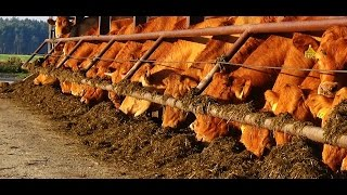 Ferma bydła mięsnego Gołanice - PR Długie Stare