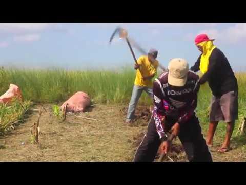 Ananas Anam Pinatex Video