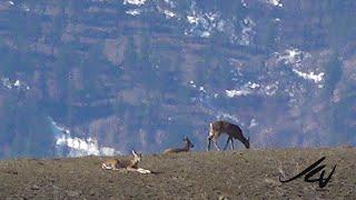 Okanagan British Columbia March 16, 2020 -  Sun, snow, deer and feeling good about life