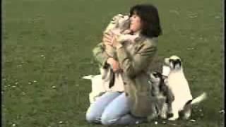 Ездовые собаки (документальный фильм).flv