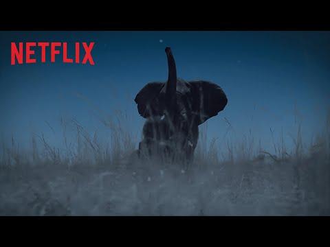 Die Erde bei Nacht | Trailer | Netflix