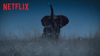Die Erde bei Nacht   Trailer   Netflix