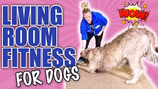 5 Tricks To Teach Your Dog That Will Exercise Them At Home!