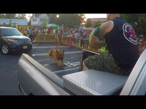 K-9 Hunter apprehending a bad guy sitting on the back of a pick up.