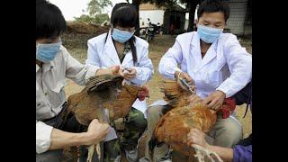 ثلاثة تحورات في #فيروس إنفلونزا الطيور قد تجعله وباء