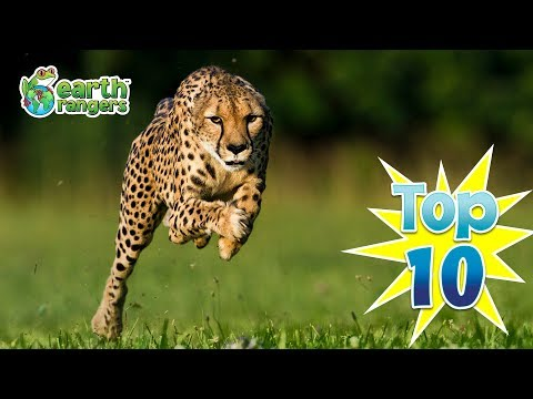 Top Ten Animals That Can Outrun You