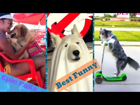Funny Dogs Vines Compilation I You could probably Die Laughing While Watching This Ep 2