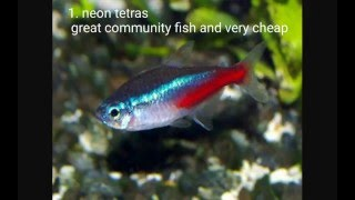 15 cool freshwater tropical fish
