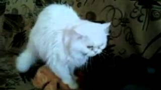 кот трахает медмедя