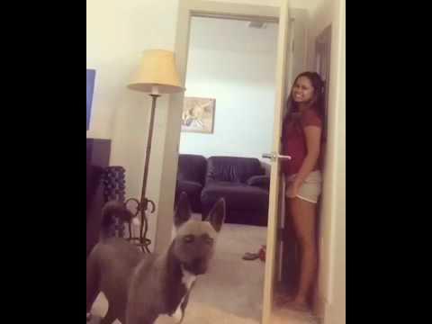 Игра в прятки с собакой.