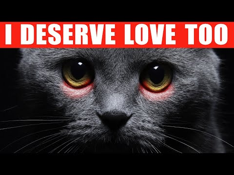 12 Ways to Tell Your Cat You Love Them in a Language They Understand