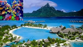 Video Incredible Andaman and Nicobar Islands 2017:Scuba Diving,Beaches,Havelock and Neil Island MUST WATCH download MP3, 3GP, MP4, WEBM, AVI, FLV September 2017