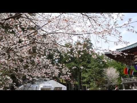 【UNESCO World Heritage】Koyasan Shingon Buddhism Kongobuji explained  Danjo Garan