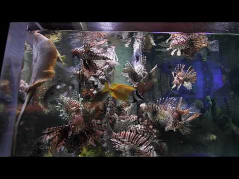 Dubai Mall Underwater Zoo [1080p HD]