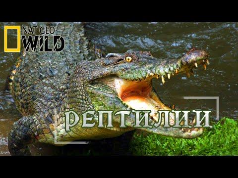 Рептилии охотники. Мир природы, дикие животные. #Документальный фильм. National Geographic