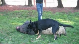 Von Erich K9: Personal Protection Dog Training 07-14-2012