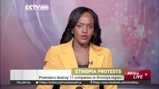 CCTV : Protesters In Ethiopia Destroy 11 Companies In Oromiya Region
