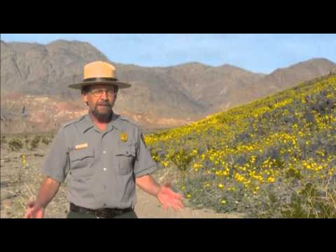 5056 CALIFORNIA-DEATHVALLEY WILDFLOWERS