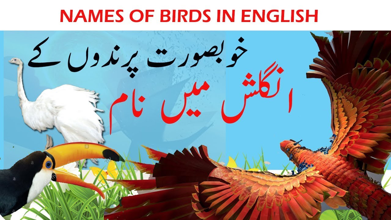 Birds Name In English And Urdu With Pictures | Imaganationface org