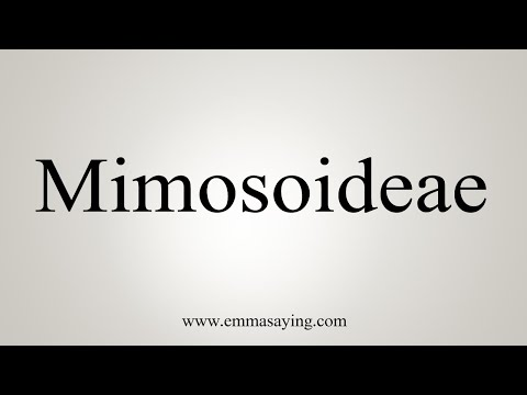 How To Pronounce Mimosoideae