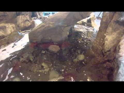 MN Zoo Trip for Invertebrate Biology