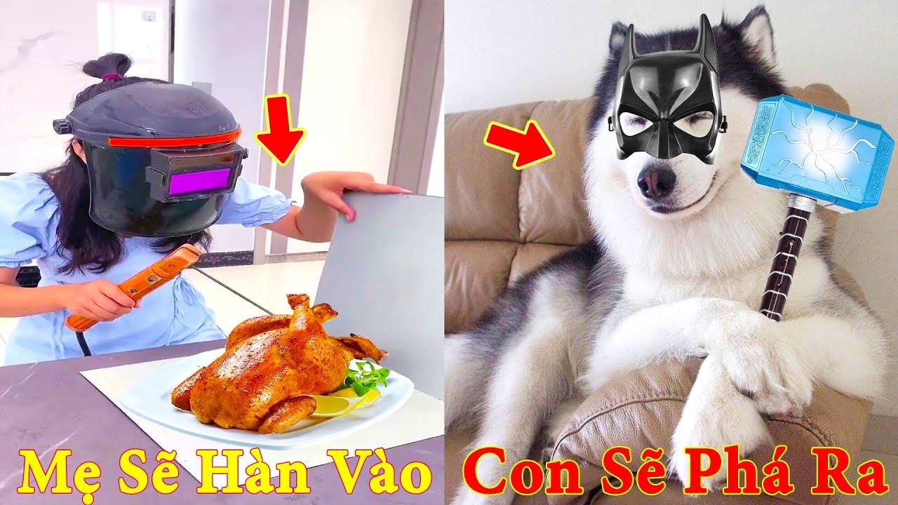 Thú Cưng TV   Ngáo và Đầu Moi #6   chó thông minh vui nhộn   funny Pets cute smart dog