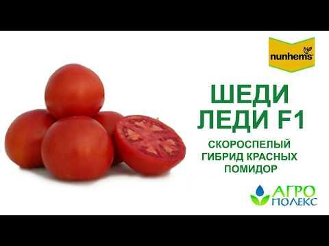 Шеди Леди – лушний скороспелый томат