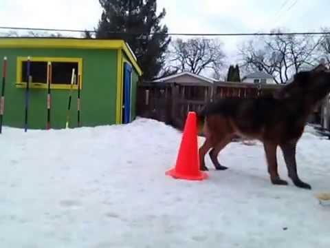 chico's-training-1