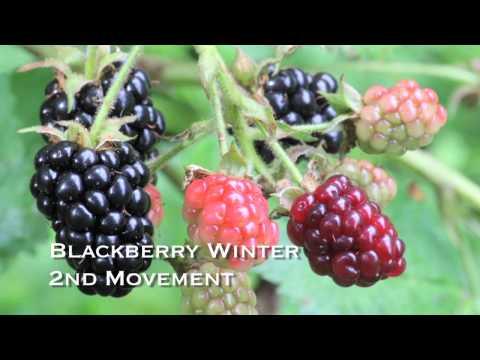 Blackberry Winter - Conni Elisor