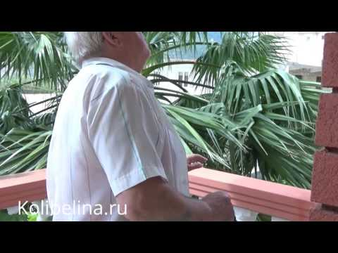 Недвижимость в Черногории - Дом в Игало
