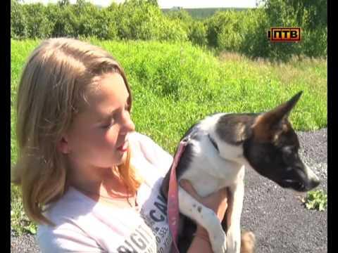 150 собак и столько же кошек обитают в Приюте для бездомных животных