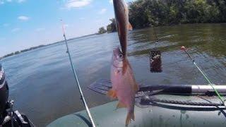Рыбалка с лодки на Днепре. Плотва.Карась.(Видео отчет очередной рыбалки на Днепре в районе города Кременчуг. В данном видео вы сможете увидеть как..., 2016-07-06T18:57:06.000Z)
