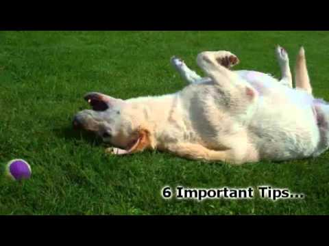 Dog Training Tips - 6 Tips To Successful Obedience Dog Training