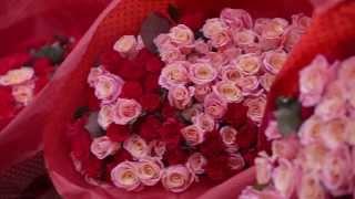 Элитный Букет Букет 1001 роза - Соняшнык(Эксклюзивный Аскания Флора в Полтаве и Полтавской области Подарок 1001 роза (тысяча и одна роза) в честь дня..., 2015-04-13T08:10:31.000Z)