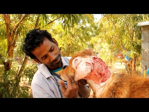 The Worst Wound: Street Dog's Epic Recovery