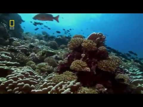 Pacific Ocean Paradise - Nature Documentary