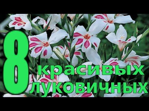 8 САМЫХ ПОПУЛЯРНЫХ ЛУКОВИЧНЫХ ЦВЕТОВ весенней посадки в саду/Елена Мир Семян и Цветов