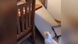 Cat destroys 2000 piece puzzle project
