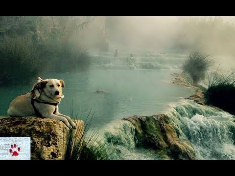 gypsy-heart---the-unwanted-dog-that-longed-to-see-the-world