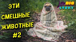 Смешные Видео с Животными Самые смешные животные 2