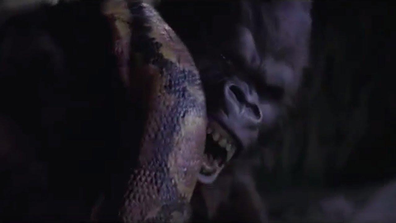 Gorilla vs Anaconda Fight To Death - Wild Animals Attack ...