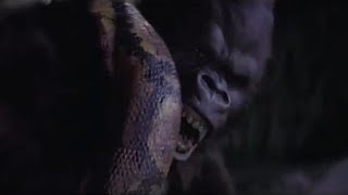 Gorilla vs Anaconda Fight To Death - Wild Animals Attack