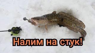Налим на стук Рыбалка на налима зимой