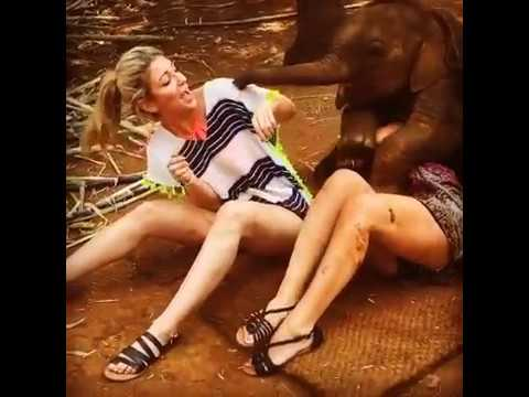 """""""น้ำพุ"""" ช้างน้อยขี้อ้อนจากเชียงใหม่ ไล่กอดคลุกคลีสาวแหม่มอย่างน่ารักน่าชัง"""