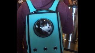 Подборка приколов. Рюкзак для переноски кота.
