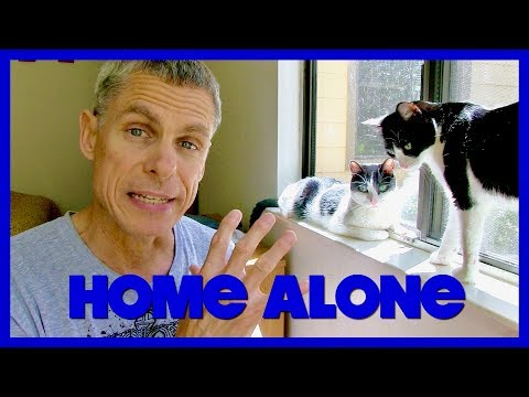 Leaving Cats Home Alone!