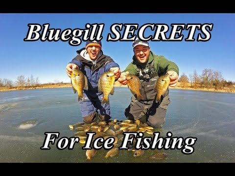 Bluegill SECRETS Ice Fishing - Wax Worms On The Double Rig