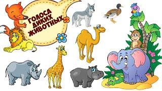 Голоса диких животных. Дикие животные для детей.