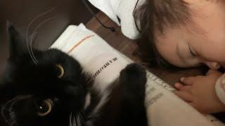 目覚めキスで心地よい朝を提供する猫 ラガマフィン The cat that gives the best awakening
