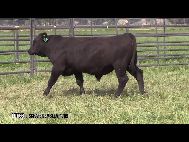 Mid Valley Bull Sale Lot 68